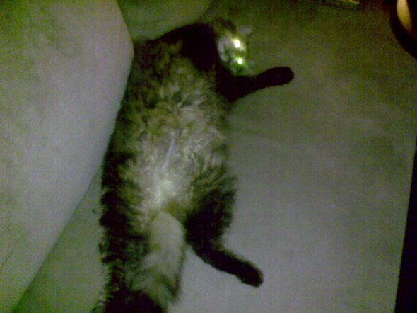 roger-an-alien-cat