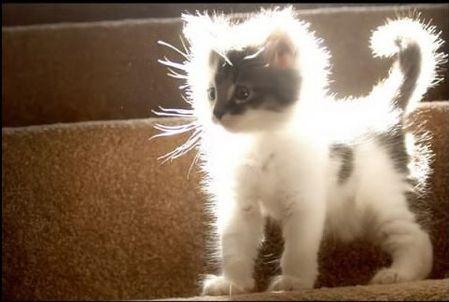 godly-kitten1